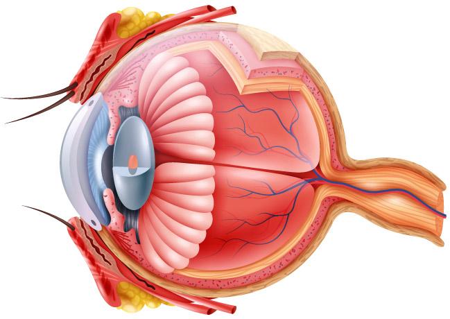 cum să îmbunătățim vederea cu degenerescența maculară